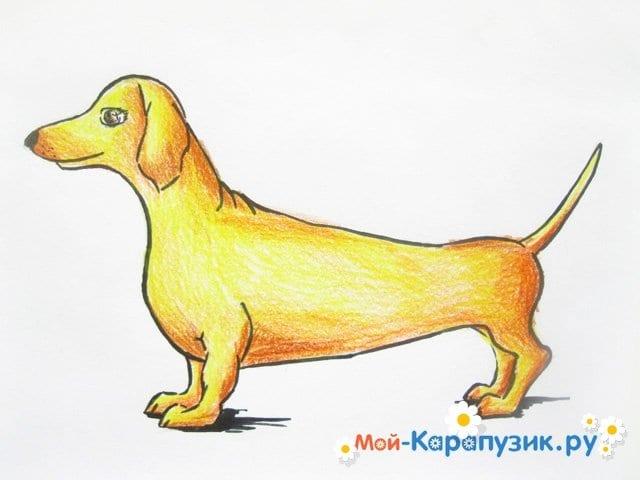 Поэтапное рисование таксы цветными карандашами - фото 13