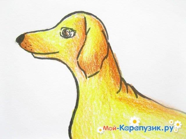 Поэтапное рисование таксы цветными карандашами - фото 15