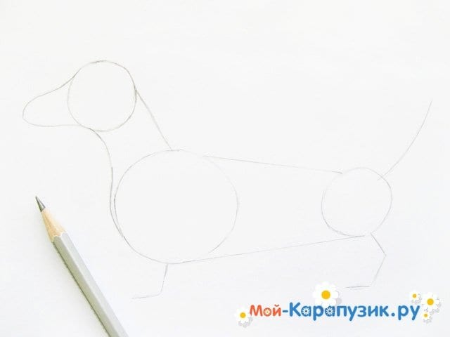 Поэтапное рисование таксы цветными карандашами - фото 4
