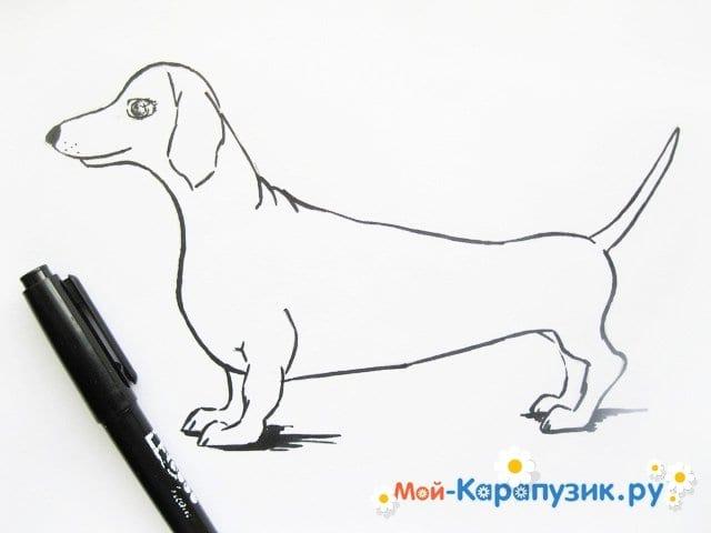 Поэтапное рисование таксы цветными карандашами - фото 8