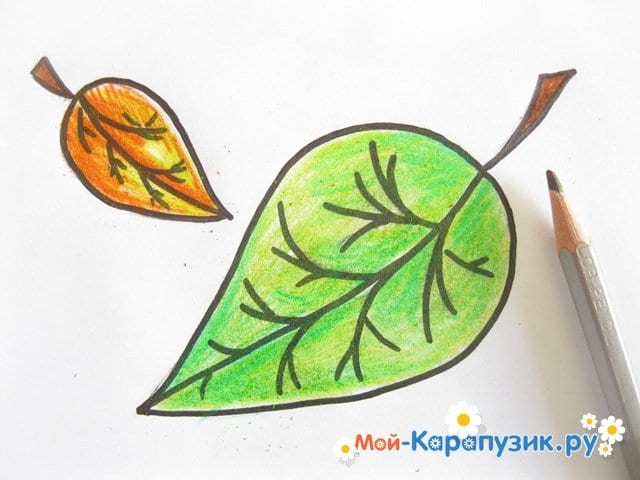 Поэтапное рисование листьев цветными карандашами - фото 11
