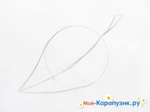 Поэтапное рисование листьев цветными карандашами - фото 5