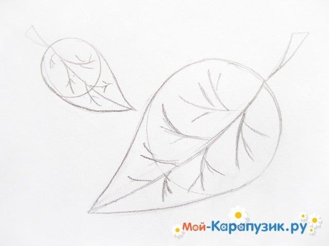 Поэтапное рисование листьев цветными карандашами - фото 7