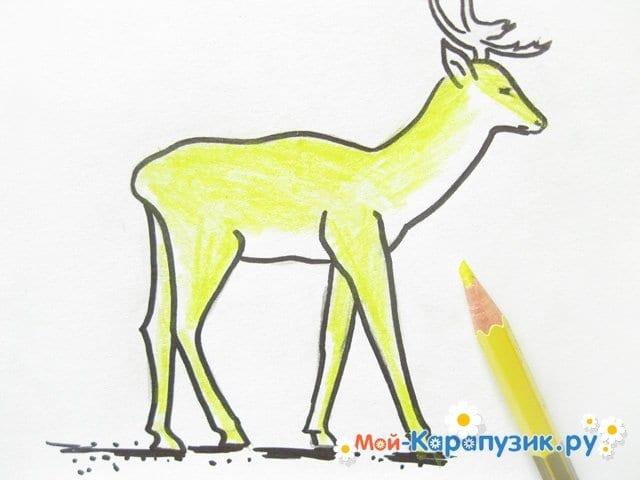 Поэтапное рисование оленя цветными карандашами - фото 10