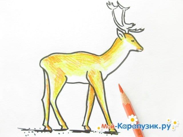 Поэтапное рисование оленя цветными карандашами - фото 11