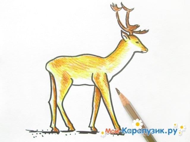 Поэтапное рисование оленя цветными карандашами - фото 12