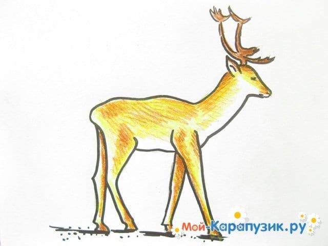 Поэтапное рисование оленя цветными карандашами - фото 13