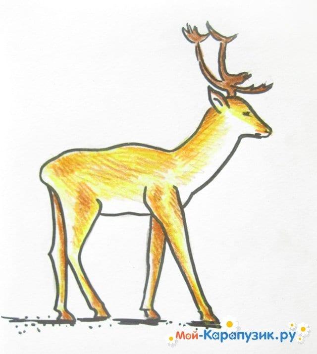 Поэтапное рисование оленя цветными карандашами - фото 14