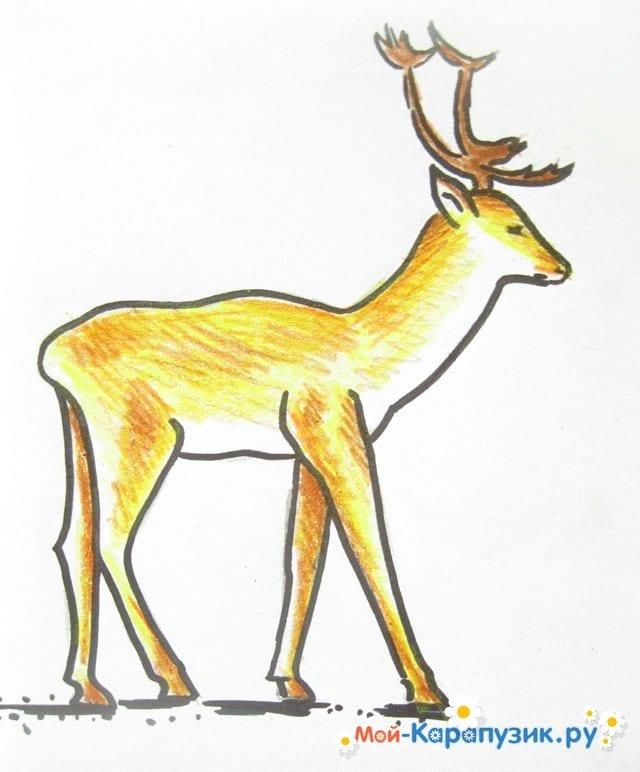 Поэтапное рисование оленя цветными карандашами - фото 15