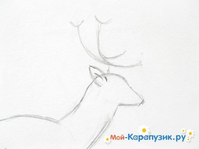 Поэтапное рисование оленя цветными карандашами - фото 6
