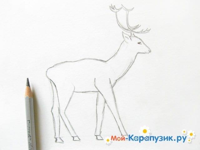 Поэтапное рисование оленя цветными карандашами - фото 8