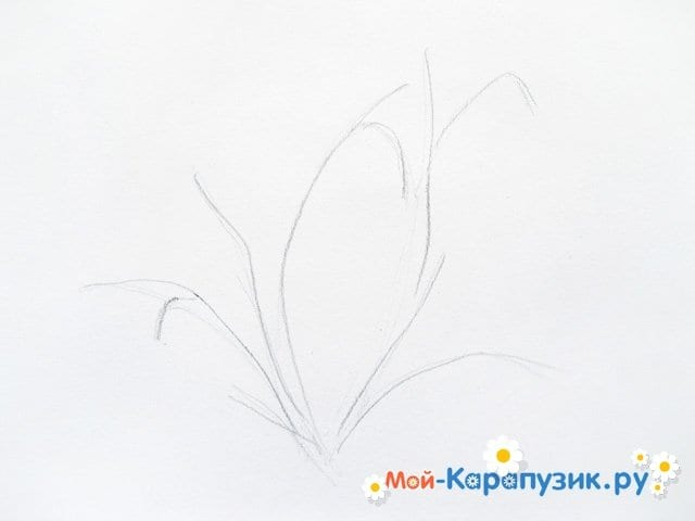 Поэтапное рисование подснежников цветными карандашами - фото 2