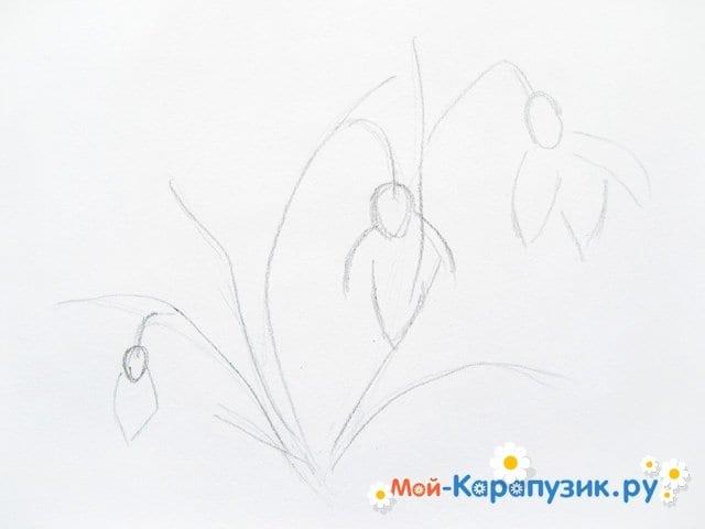 Поэтапное рисование подснежников цветными карандашами - фото 3
