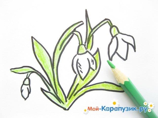 Поэтапное рисование подснежников цветными карандашами - фото 7