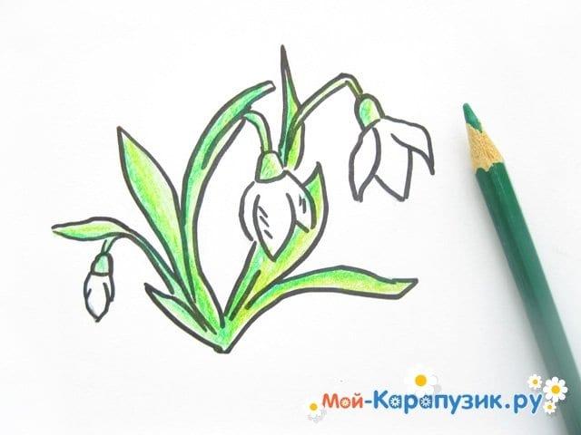 Поэтапное рисование подснежников цветными карандашами - фото 8