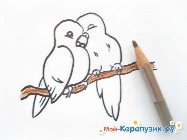 Поэтапное рисование волнистого попугая цветными карандашами - фото 10