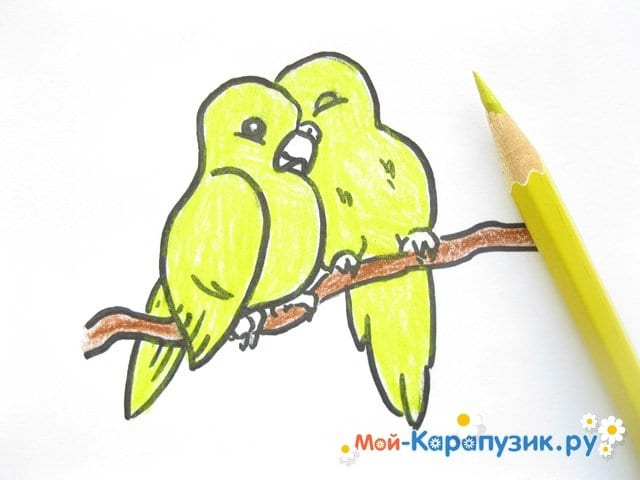 Поэтапное рисование волнистого попугая цветными карандашами - фото 11