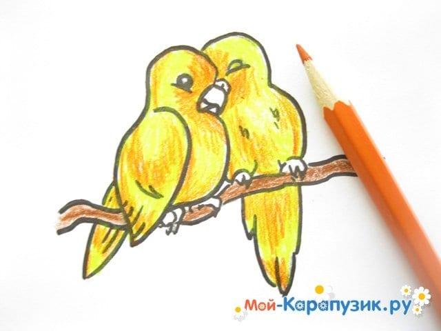 Поэтапное рисование волнистого попугая цветными карандашами - фото 12