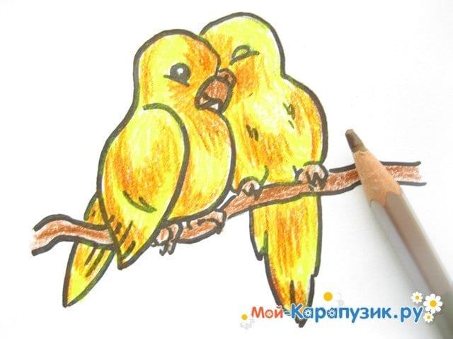 Поэтапное рисование волнистого попугая цветными карандашами - фото 13