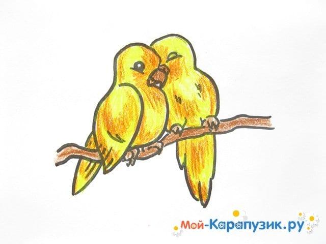 Поэтапное рисование волнистого попугая цветными карандашами - фото 14