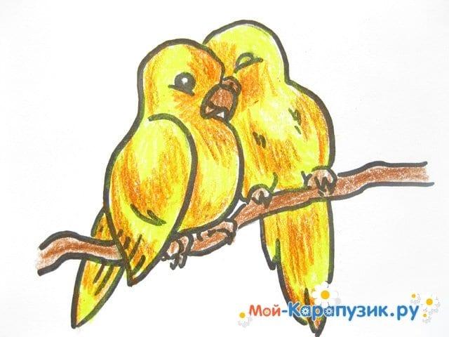 Поэтапное рисование волнистого попугая цветными карандашами - фото 15
