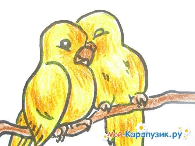 Поэтапное рисование волнистого попугая цветными карандашами - фото 16