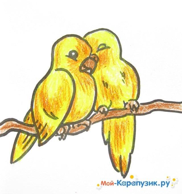 Поэтапное рисование волнистого попугая цветными карандашами - фото 17