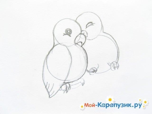 Поэтапное рисование волнистого попугая цветными карандашами - фото 6