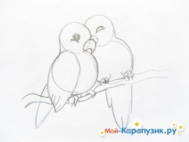 Поэтапное рисование волнистого попугая цветными карандашами - фото 8