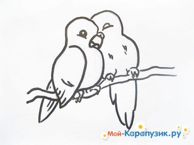 Поэтапное рисование волнистого попугая цветными карандашами - фото 9