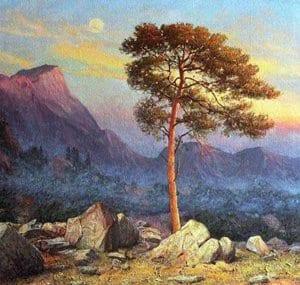 Образ сосны из стихотворения М.Ю. Лермонтова «На севере диком стоит одиноко»