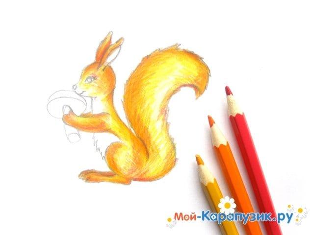 Поэтапное рисование белки цветными карандашами - фото 11