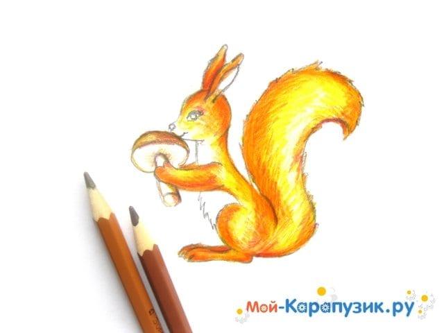 Поэтапное рисование белки цветными карандашами - фото 12