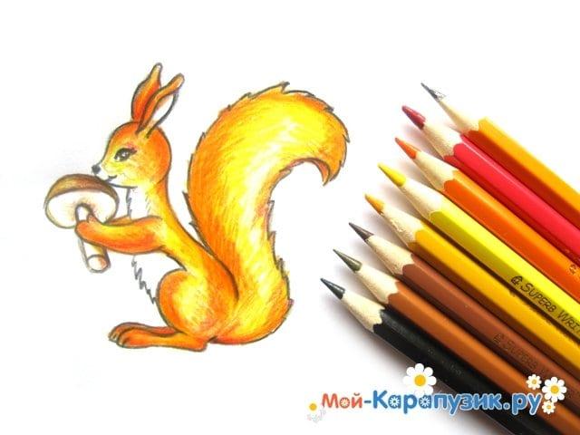 Поэтапное рисование белки цветными карандашами - фото 15