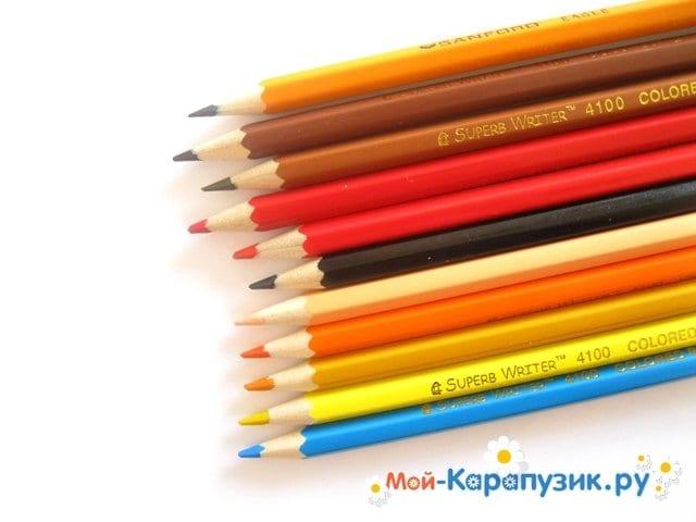 Поэтапное рисование попугая цветными карандашами - фото 1