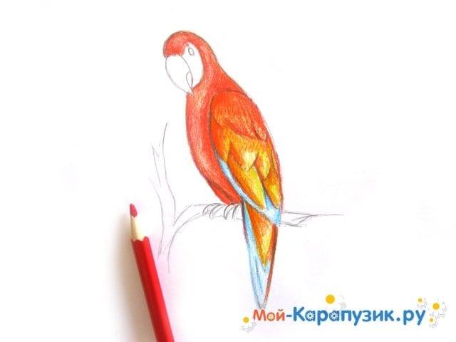 Поэтапное рисование попугая цветными карандашами - фото 10