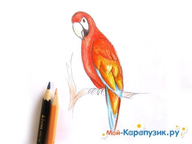Поэтапное рисование попугая цветными карандашами - фото 11