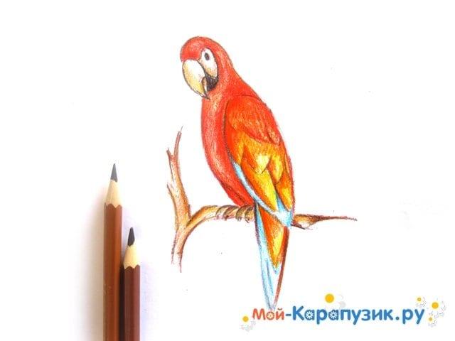 Поэтапное рисование попугая цветными карандашами - фото 12