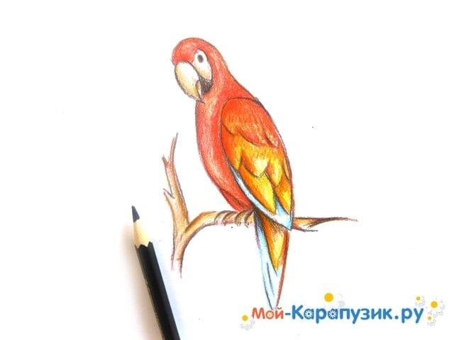 Поэтапное рисование попугая цветными карандашами - фото 13