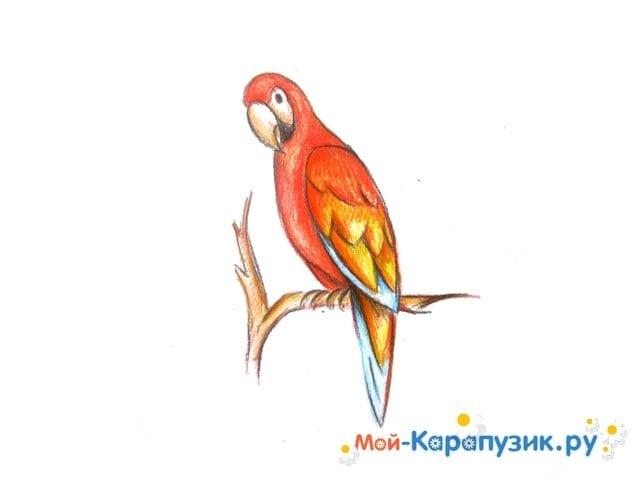 Поэтапное рисование попугая цветными карандашами - фото 14