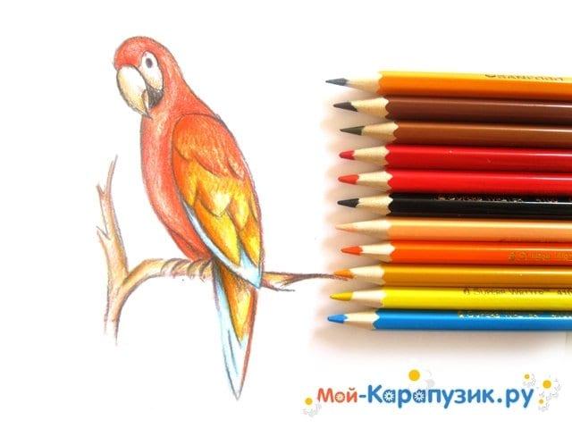 Поэтапное рисование попугая цветными карандашами - фото 15