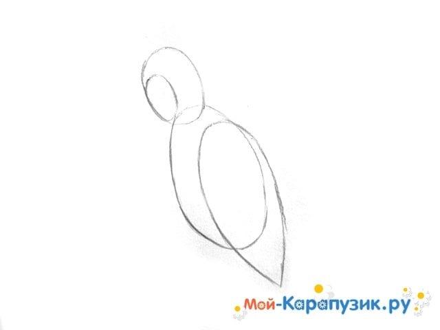 Поэтапное рисование попугая цветными карандашами - фото 3