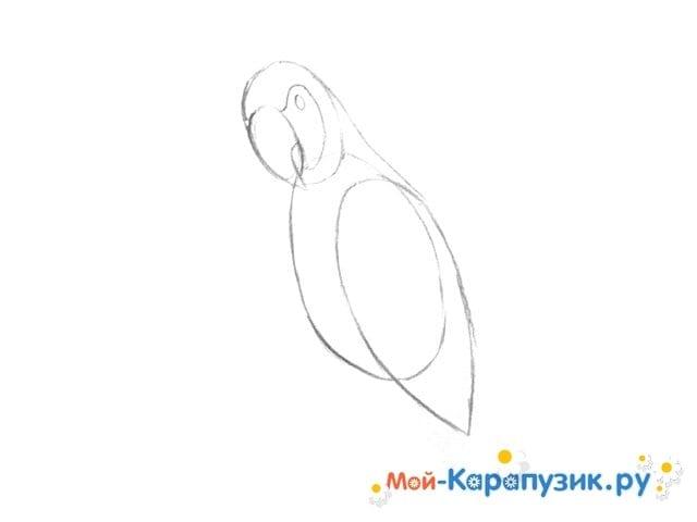 Поэтапное рисование попугая цветными карандашами - фото 4