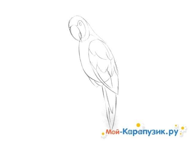 Поэтапное рисование попугая цветными карандашами - фото 5