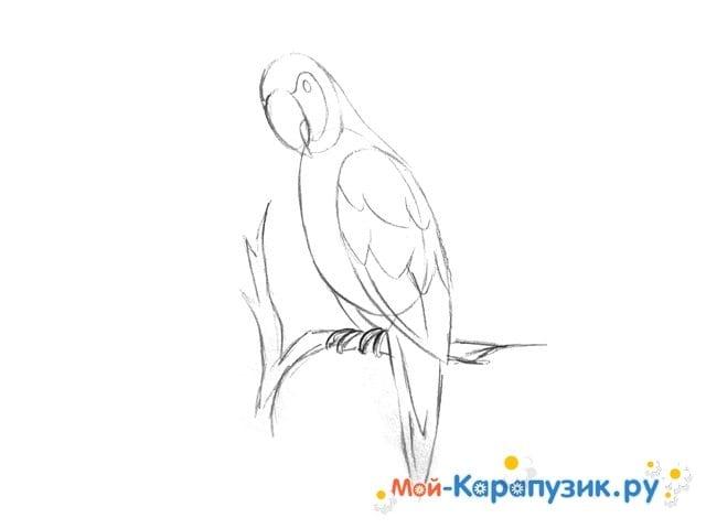 Поэтапное рисование попугая цветными карандашами - фото 6