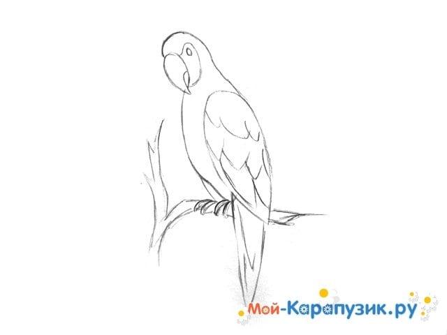 Поэтапное рисование попугая цветными карандашами - фото 7