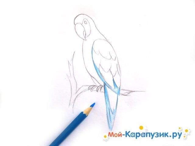 Поэтапное рисование попугая цветными карандашами - фото 8