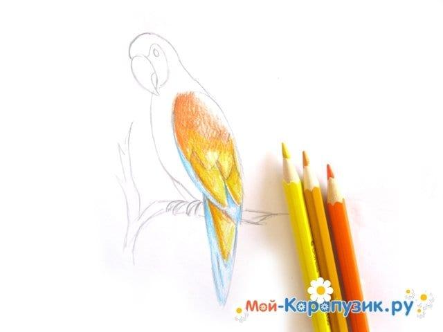 Поэтапное рисование попугая цветными карандашами - фото 9